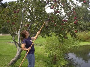 Susie picks Red Delicious by the pond.